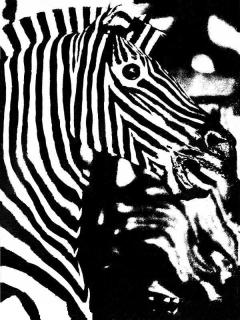 #66 Calliope Zebra Smithsonian 1978