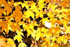 93 Autumn's Splendor