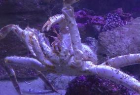 6 Crab Buffet