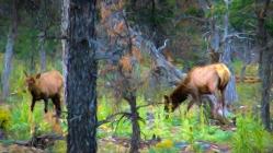 Elk Grazing Near the Grand Canyon